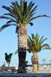 Duetto delle palme su un terrazzo Fotografia Stock