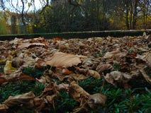 Duff på jordningen i slotten parkera av Cesky Krumlov Arkivbild