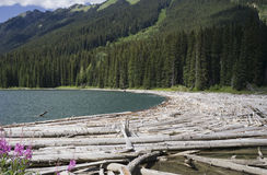 Duffey Lake and Cayoosh Creek with dead Trees Stock Images