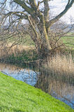 Duffus Castle moat. Moat at Duffus Castle with rushes growing in the ditch Stock Photos