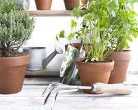 Duftpflanzen eingemacht stockfotografie
