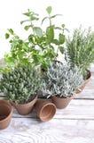 Duftpflanzen eingemacht auf einer Tabelle lizenzfreies stockfoto