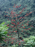 Duftstoff-Blüten Stockbild