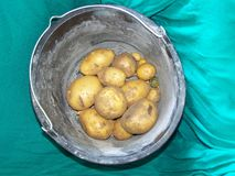 Dug potatoes in a plastic bucket on a green drapery. Dug potatoes in a old plastic bucket on a green drapery royalty free stock images
