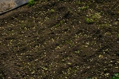 Dug up land. Small plot of plowed land for crops royalty free stock photography
