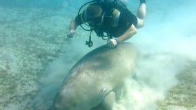 Dugong dugon απόθεμα βίντεο