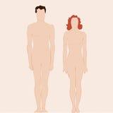 Duidelijk man en vrouwenlichaam stock illustratie