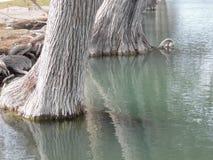 Duidelijk water Guadalupe River Royalty-vrije Stock Foto's