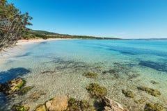 Duidelijk water in het strand van Le Bombarde in Alghero-kust royalty-vrije stock afbeelding