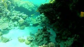 Duidelijk water in Tropische overzees stock footage