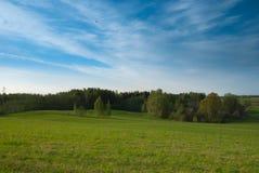 Duidelijke de lentehemel, landbouwgrondgebied met berken stock fotografie