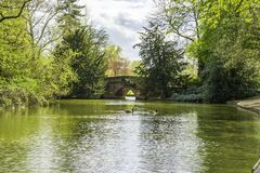 Duidelijke die watervijver door bomen in een park wordt omringd stock afbeelding