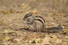 Duidelijke en dichte schoten van eekhoorn achter aard royalty-vrije stock foto
