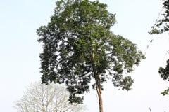 Duidelijke hemel en groene boom stock afbeelding