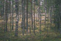 duidelijke ochtend in het hout sparren en pijnboomboombos met tru stock afbeelding