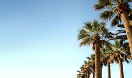 Duidelijke palmen in de lucht Stock Fotografie