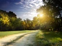 Duidelijke stralen die van licht door het bos in vroege ochtend glanzen Stock Fotografie