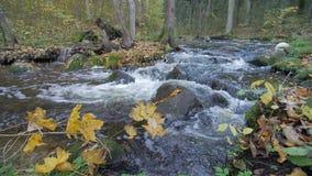 Duidelijke Waterkreek die door Autumn Forest With Yellow Leaves stromen stock video