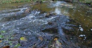 Duidelijke Waterkreek die door Autumn Forest With Yellow Leaves stromen stock videobeelden