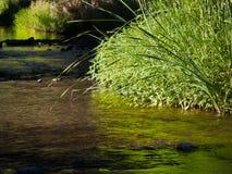 Duidelijke waterkreek met riet en lang gras Stock Foto's