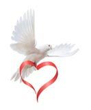 Duif in de lucht met vleugels brede open royalty-vrije stock afbeeldingen