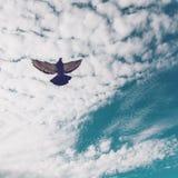 duif die in de hemel hangen Stock Fotografie