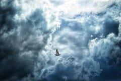 Duif die in de wolken vliegen Royalty-vrije Stock Afbeelding