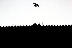 Duif die van het dak van paleis vliegen Stock Fotografie