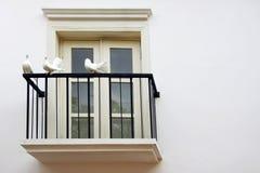 Duif drie bij de Vensters van het Balkon Stock Fotografie