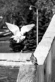 Duif-engelen in de de lentestad stock fotografie