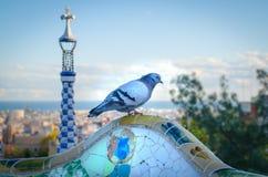 Duif in het Antoni Gaudi-park royalty-vrije stock foto