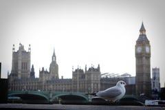 Duif in Londen Royalty-vrije Stock Afbeeldingen