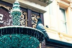 Duif op een fontein Royalty-vrije Stock Afbeelding