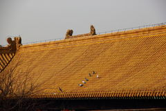 Duif op het dak van paleis stock foto