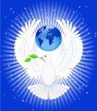 Duif van Vrede. Stock Afbeelding