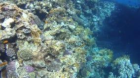 Duikend op het Rode Overzees, indrukwekkende types van een verbazend koraalrif stock video