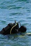 duiker Stock Fotografie