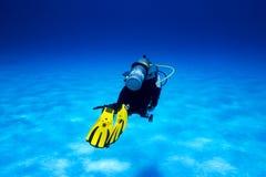 duiker Royalty-vrije Stock Afbeelding