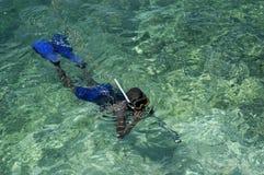 duiker Royalty-vrije Stock Foto