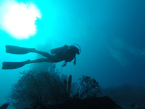 Duiker die in de oceaan zwemmen Stock Afbeeldingen