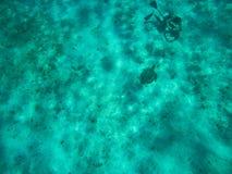 Duiker die een foto van een schildpad op de bodem van Caraïbische Zee nemen stock fotografie
