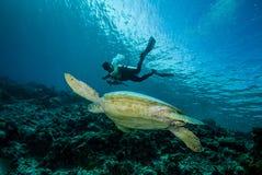 Duiker en groene zeeschildpad in Derawan, Kalimantan, de onderwaterfoto van Indonesië Royalty-vrije Stock Foto's