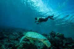 Duiker en groene zeeschildpad in Derawan, Kalimantan, de onderwaterfoto van Indonesië Royalty-vrije Stock Afbeelding
