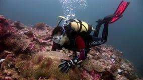 Duiker en harde ronde koraalhersenen in vorm van bal onderwaterzeebedding in de Maldiven stock videobeelden