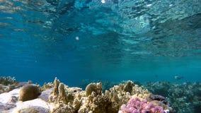 Duiker en Vissen Exotische vissen stock footage