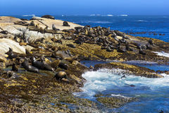 Duiker Island, South Africa. South Africa. Duiker Island Seal Island near Hout Bay Cape Peninsula, Cape Town. Cape fur seal colony Arctocephalus pusillus, also Royalty Free Stock Photo