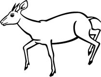Duiker. Line drawing of a small antelope, the duiker, leaping or running Stock Photography
