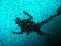 Duiker met school van vissen Royalty-vrije Stock Afbeelding