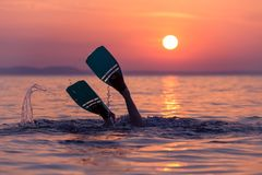 Duiker met vinnen bij zonsondergang over overzees stock fotografie