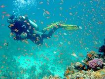Duiker met vissen Stock Fotografie